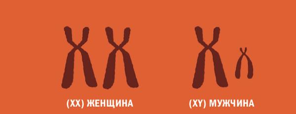 Инструкция по изготовлению человека