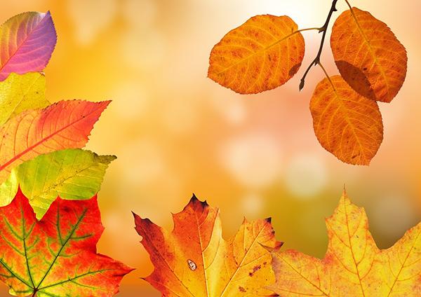 Можно ли как-то сохранить цвет осенних листьев: есть ли способ продлить их жизнь до зимы, когда яркие природные оттенки на улице редки? Можно.