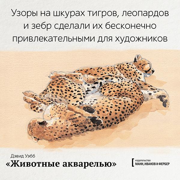 Узоры на шкурах тигров, леопардов и зебр сделали их бесконечно привлекательными для художников