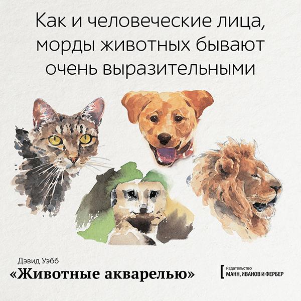 Как и человеческие лица, морды животных бывают очень выразительными