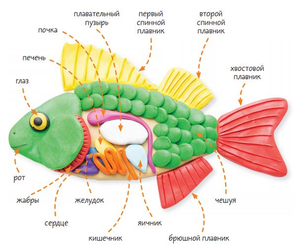 Рыбы — древнейшие из позвоночных животных