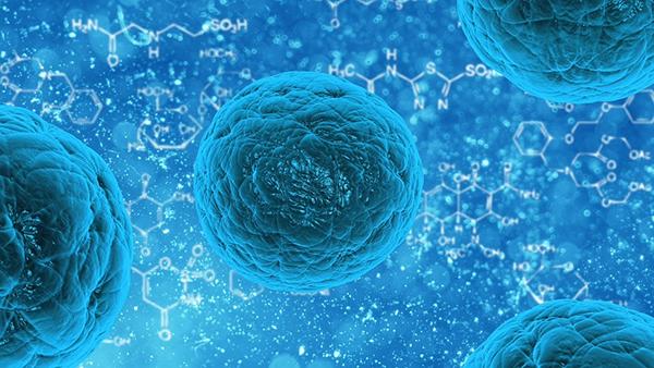 Количество обитающих в нашем кишечнике микроорганизмов в десять (!) раз больше количества наших собственных клеток.
