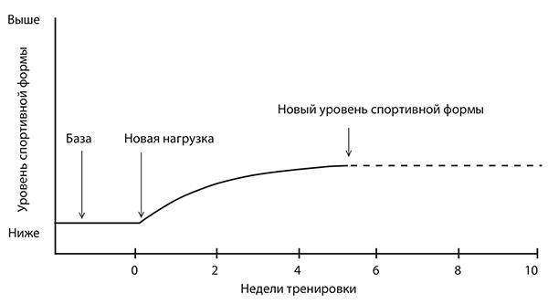На рисунке ниже показано, как организм реагирует на новую нагрузку.