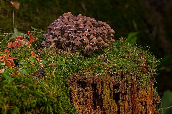 К этому царству относятся знакомые всем шляпочные грибы, плесени и дрожжи.