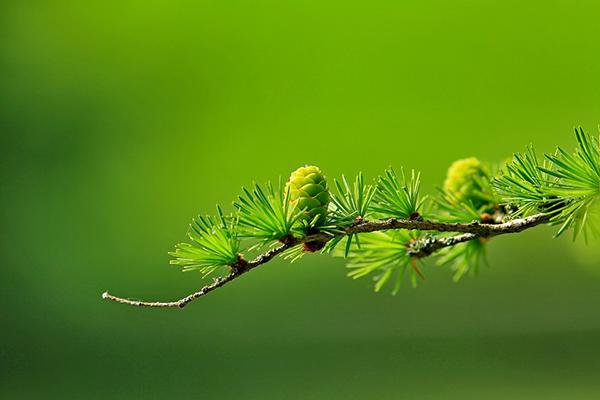 Растения, как и животные, чувствительны к воздействию различных факторов и реагируют на них ростовыми движениями тех или иных органов.